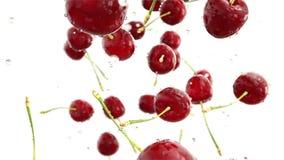 Cherrys que baja con descensos del agua Cámara lenta Animación realista aislante ilustración del vector