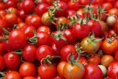 Cherrys tomatoes. Red cherrys, fresh tomatoes ,for background Royalty Free Stock Photos