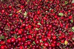 Cherryskärm Royaltyfria Bilder