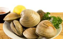 cherrystonen samlar musslor nytt Arkivfoto
