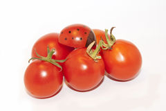 Cherrytomat Arkivbilder