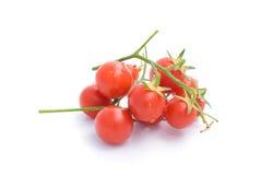 Cherrytomater Royaltyfri Bild