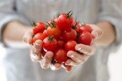 Cherrytomater i Womans händer Fotografering för Bildbyråer