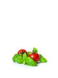Cherrytomater med basilika Arkivfoto