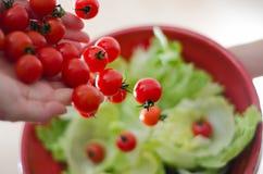 Cherrytomater som dråsar på grönsallat Arkivfoto