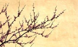 Cherrytree Fotografering för Bildbyråer