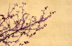Cherrytree Arkivfoto