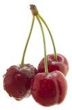 Cherryutklipp söta tre arkivbilder