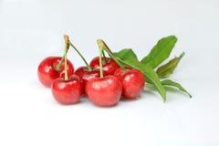 Cherrywhite Royaltyfri Fotografi