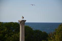 Chersonesus, чайка на коринфских столбцах Стоковые Фото