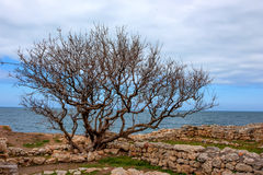Chersonesus ruins in Crimea Royalty Free Stock Photography