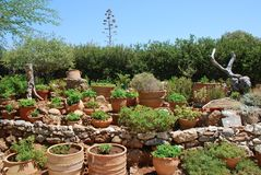 Chersonissos,塞浦路斯,希腊- 31 07 2013年:庭院植物和花卉生长在泥罐 免版税库存图片