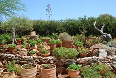 Chersonissos, Cyprus, Griekenland - 31 07 2013: Tuin van installaties en bloemen die in kleipotten groeien royalty-vrije stock afbeelding