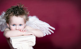 Cherub Valentine. Boy Angel with Space on right for text on red background royalty free stock photo