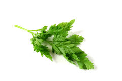 Chervil Royalty Free Stock Images