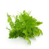 Chervil Royalty Free Stock Photography