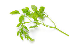 Chervil Stock Photos
