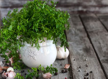 Chervil background. Bunch of chervil on chopping desk with garlic and pepper. Copy space background Stock Image