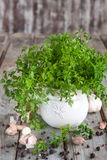 Chervil. Bunch of chervil on chopping desk with garlic and pepper Stock Images