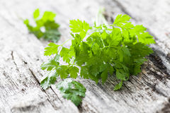 Chervil. Fresh chervil on wooden background Stock Photos