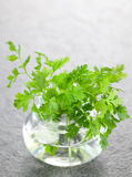 Chervil in a glass. Fresh raw chervil herb in a glass Stock Photography