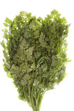 Chervil Leaves Isolated Stock Photography