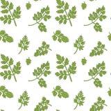 Chervil seamless pattern Royalty Free Stock Image