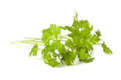 Chervil twig isolated Stock Image