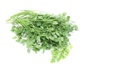 Chervil in a white background. Pictured Chervil in a white background Stock Photo