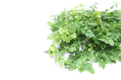 Chervil in a white background. Pictured Chervil in a white background Royalty Free Stock Image
