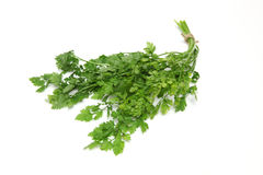 Chervil in a white background. Pictured Chervil in a white background Royalty Free Stock Photos