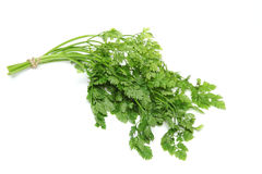 Chervil in a white background Royalty Free Stock Image
