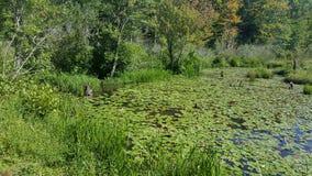Chesapeake falezy ślad Fotografia Stock