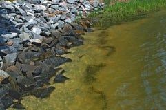Chesapeake zatoki falochronu przypływ iść out z bagno trawą fotografia stock