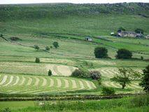 Cheshire för hödanandefältet svart vaggar lantgården Fotografering för Bildbyråer