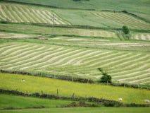 Cheshire för hödanandefältet svart vaggar lantgården Arkivbild
