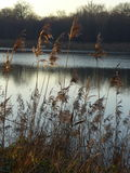 Cheshire jezioro Obrazy Royalty Free