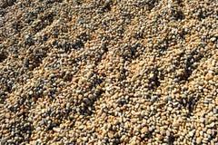 Chesil strand Royaltyfria Foton