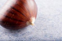Chesnut над камнем lite голубым Стоковые Фото