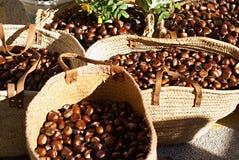Chesnut Foto de archivo