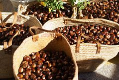 chesnut Στοκ Εικόνες