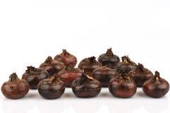 Chesnut al suolo, frutti cinesi delle castagne d'acqua della Tailandia Fotografia Stock Libera da Diritti