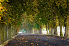 Chesnut avenue Royalty Free Stock Photos