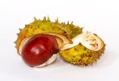 Chesnut burr split open Royalty Free Stock Photos