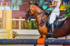 Sorrel dressage horse and rider in uniform performing jump at show jumping competition. Equestrian sport background. Chesnut horse portrait during dressage Stock Image