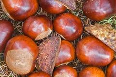 Chesnuts Stockfotografie