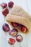 Chesnuts Royalty-vrije Stock Foto's