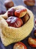 Chesnuts Стоковое Изображение RF