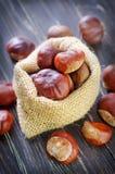 Chesnuts Стоковые Фото