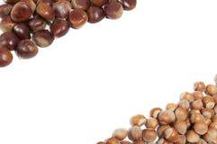 Chesnuts and hazelnuts frame on white background. Chesnuts and hazelnuts frame isolated on white background Royalty Free Stock Image